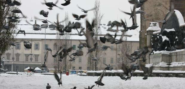 I piccioni di Parma al monumento di Verdi